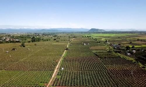 'Thủ phủ' trồng thanh long của Việt Nam