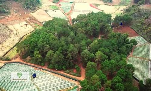 10 ha dâu tây lạc giữa rừng thông Mộc Châu