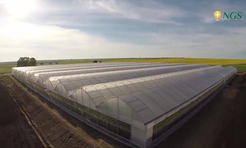 Mô hình trồng dâu tây cho năng suất gấp đôi