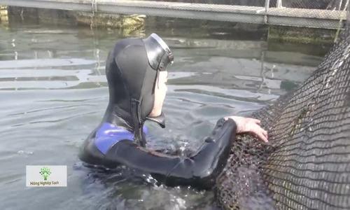 Nuôi cá tầm dài 1m, nặng 30kg giữa lòng sông Đà