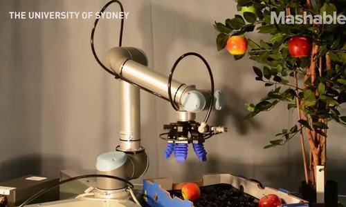 Đại học Sydney chế hàng loạt robot trồng rau cho tương lai