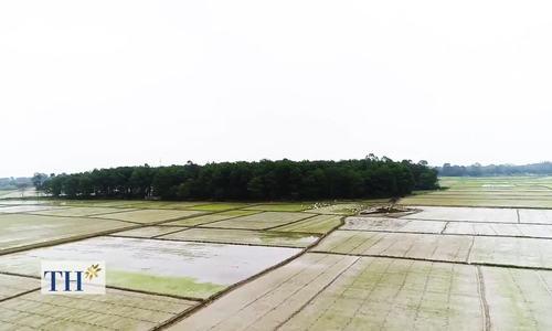 Cách người Huế làm sữa hữu cơ từ gạo lứt