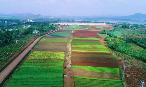 Ngân hàng Bắc Á rót hơn 53% tín dụng cho dự án nông nghiệp