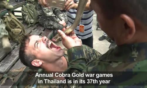 Lính thủy đánh bộ Thái Lan, Mỹ uống máu rắn, ăn bọ cạp