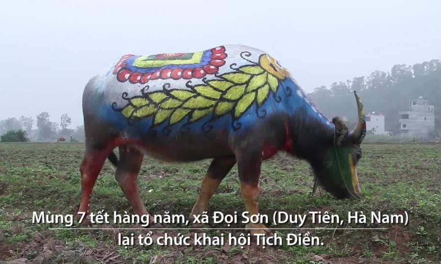 Đàn trâu khoe sắc rực rỡ ở lễ hội Tịch Điền