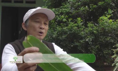 Ngôi làng gói bánh chưng bằng lá chít ở Bắc Giang