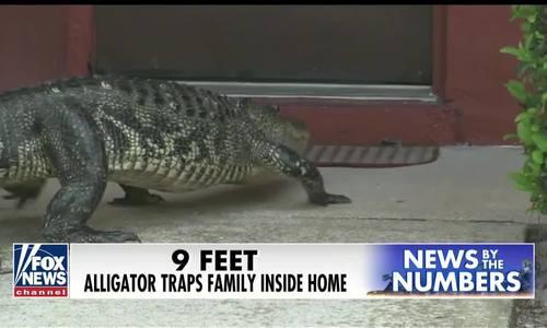 Cá sấu gần ba mét bò đến trước cửa nhà dân