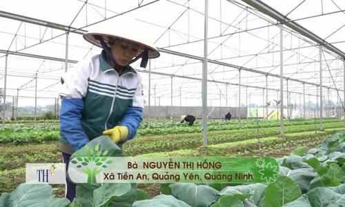 900 tấn rau sạch Quảng Yên tìm đường vào siêu thị