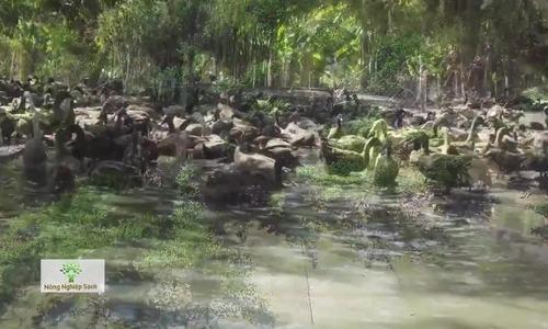 Nông dân xây vườn sinh thái cho vịt, thu 120 triệu trứng mỗi năm