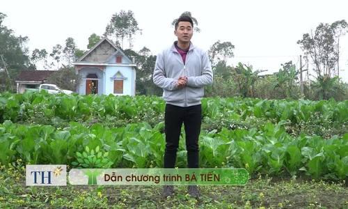 Nghề muối 'dưa chua úp thảm' của người Quảng Ninh