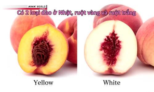 Bí quyết trồng đào Nhật giá nửa triệu đồng mỗi quả