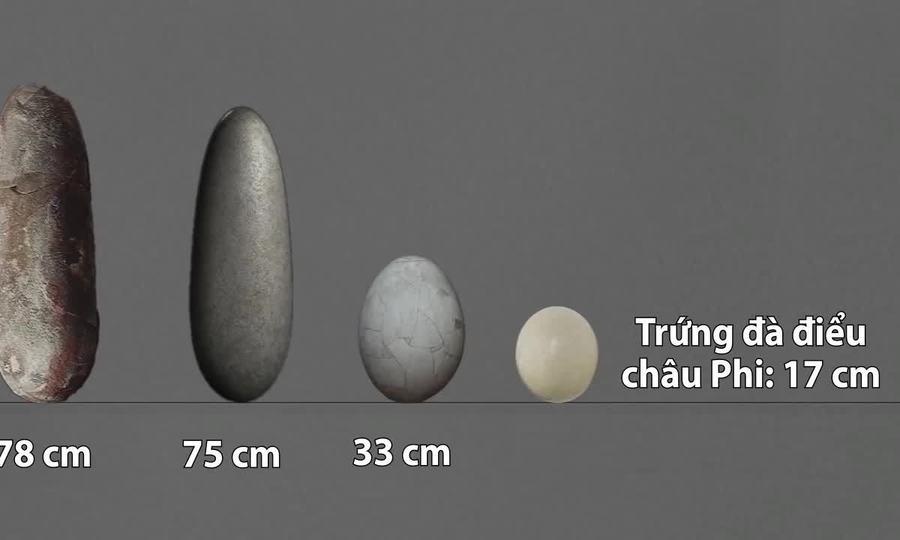So sánh kích thước trứng của các loài động vật