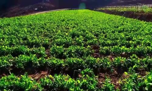 Agribank 30 năm đồng hành cùng cho vay hộ sản xuất nông nghiệp