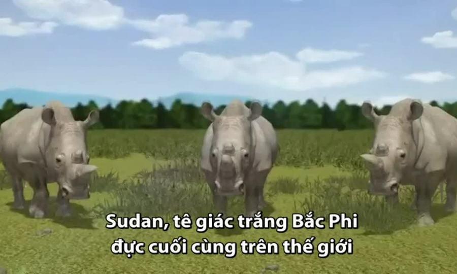 Kỹ thuật có thể hồi sinh loài tê giác trắng phương bắc