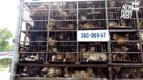 Chợ chó Việt Nam trên báo Anh