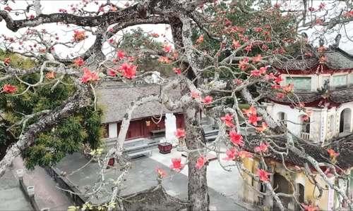 Đẹp mê hồn ngôi cổ tự Trung Hành vào mùa hoa gạo nở