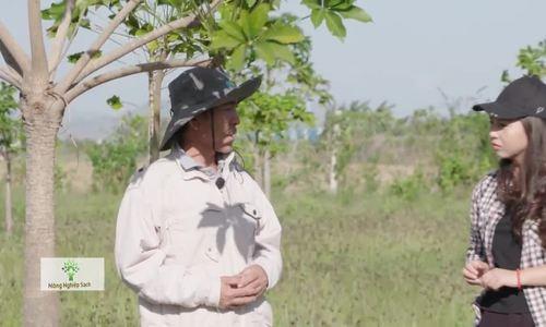 250 ha trôm khai thác mủ ở Ninh Thuận