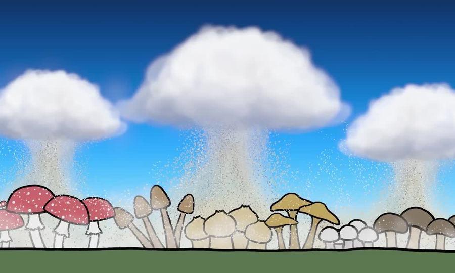 Cách nấm tạo ra mưa trên Trái Đất