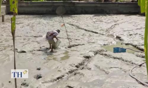 Kỹ sư 27 năm dạy bà con nuôi cá chình làm giàu