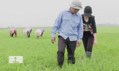 Cánh đồng gạo tám thơm 100 ha giữa lòng chảo Điện Biên