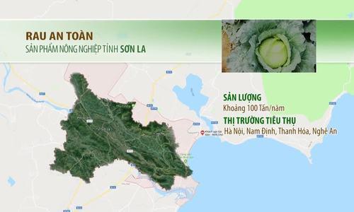 Vựa rau sạch 128 tấn của Sơn La