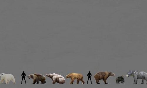 So sánh kích thước và khối lượng của các loài gấu