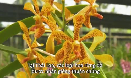 Trồng lan trên vỏ dừa bỏ đi theo cách của người Thái Lan