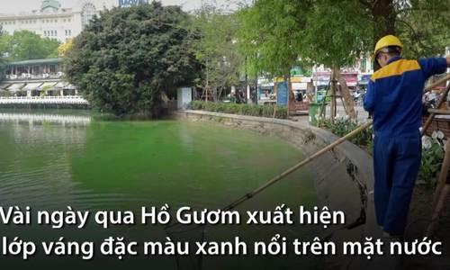 Tảo độc làm cho nước Hồ Gươm xanh khác thường