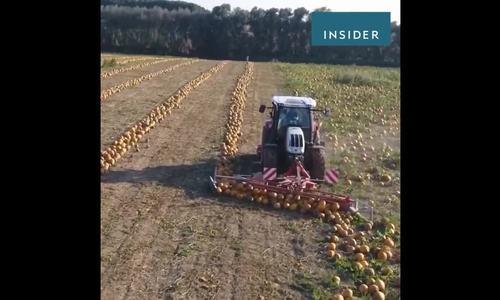 Cỗ máy thu hoạch bí ngô, tách 1.800 kg hạt trong nháy mắt