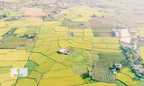 Nhiều hộ dân Ninh Thuận thoát nghèo nhờ trồng măng tây