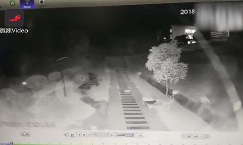 Đi dạo trong trường, nữ sinh Trung Quốc bị đàn chó hoang tấn công