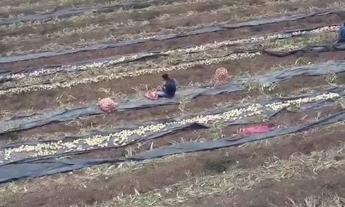 Cô gái 19 tuổi lập website kết nối 6.700 nông dân Columbia