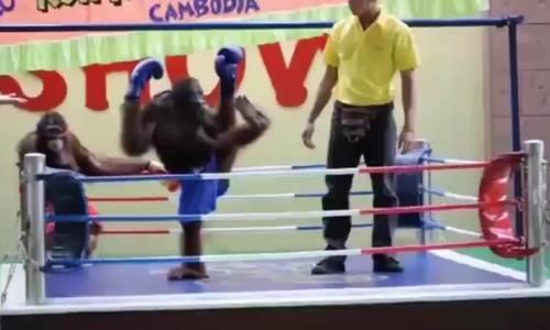 Trọng tài 'no đòn' khi bị hai võ sĩ tấn công