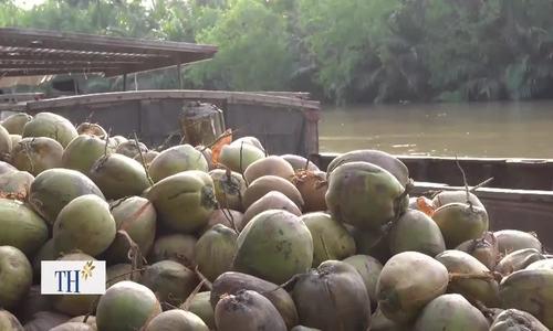Các sản phẩm dừa Trà Vinh xuất khẩu đi Trung Đông, Brazil