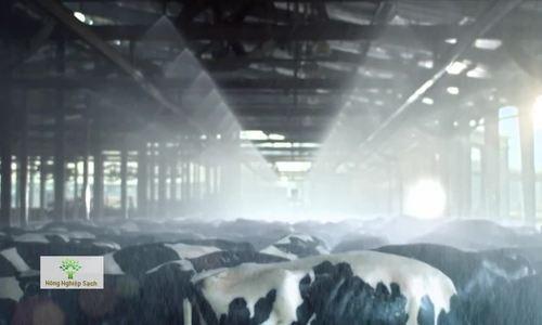 Trang trại bò sữa tại Nghĩa Đàn – Nghệ An