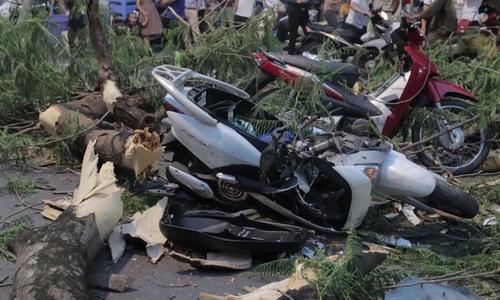 5 người bị thương do cây phượng đổ ở Hà nội