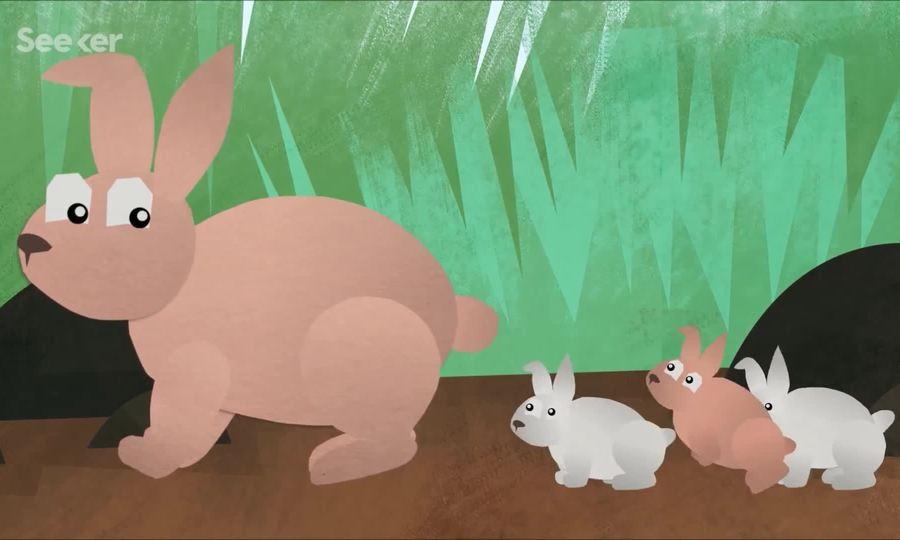 Chiến lược nuôi con kiểu 'bỏ mặc' của thỏ mẹ