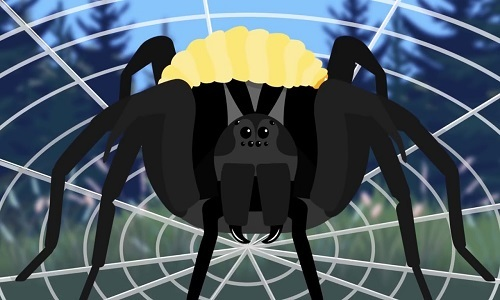 Loài nhện bị ong bắp cày biến thành xác sống để làm nô lệ