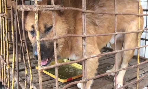 Hai người đàn ông bắt trộm chín con chó trong đêm