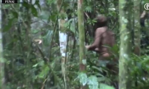 Người cuối cùng còn sống của một bộ lạc trong rừng Amazon