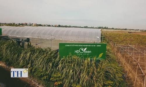 Bức tường cỏ voi bảo vệ trang trại hữu cơ 8.000m2 khỏi tác động bên ngoài