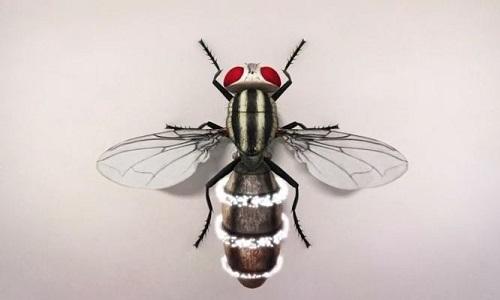 Nấm ký sinh ăn sạch cơ thể ruồi rồi phá bụng chui ra