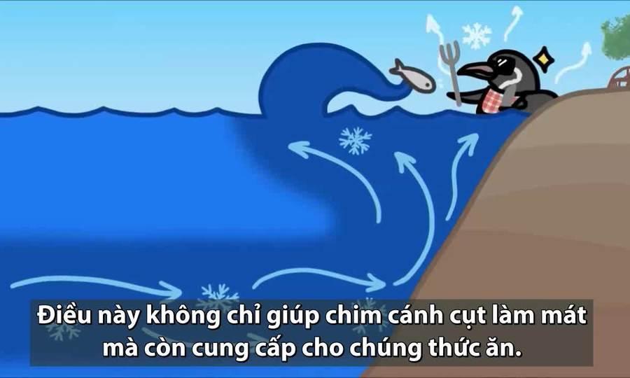 Nguyên nhân chim cánh cụt ưa lạnh xuất hiện ở xích đạo