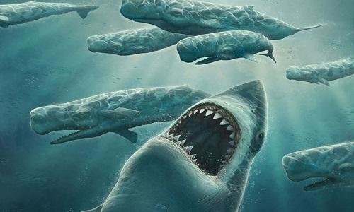 Megalodon - cá mập 60 tấn chuyên ăn thịt cá voi cổ đại