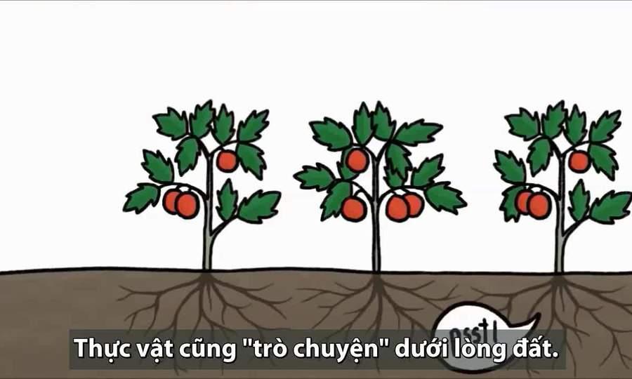 Khả năng giúp cây cối 'trò chuyện' với nhau