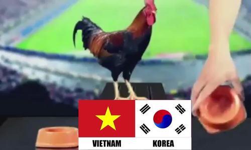 'Thần kê', chim ưng đoán Olympic Việt Nam thắng Hàn Quốc