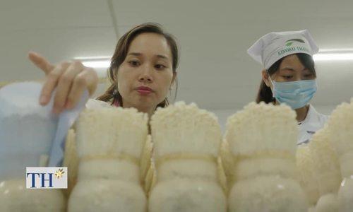 Nhà máy trồng nấm công nghệ Nhật Bản 3 triệu đô