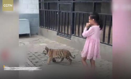 Bé gái dắt hổ đi dạo gây kinh ngạc ở Trung Quốc - ảnh 1