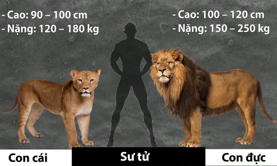 So sánh kích thước con đực và con cái ở các loài động vật