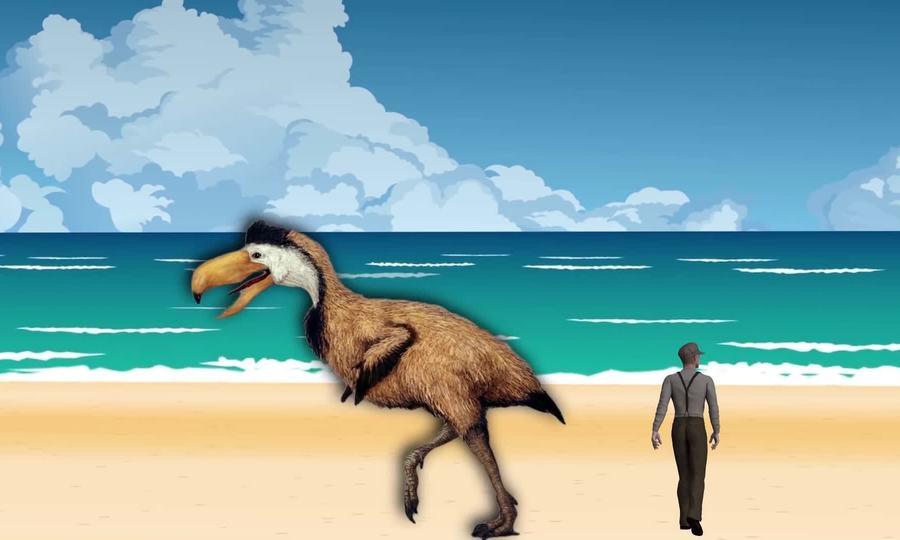 Những loài chim không biết bay lớn nhất thời tiền sử